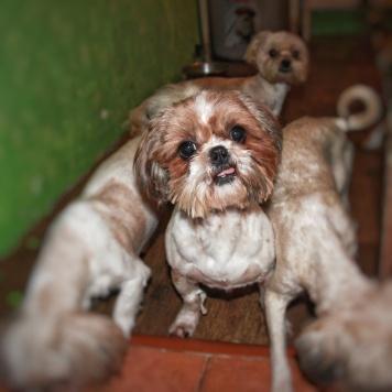 Джаз - Собаки в добрые руки