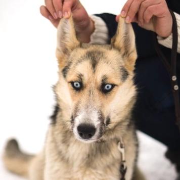 Ханни - Собаки в добрые руки