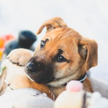 Красавчик Барс - Собаки в добрые руки