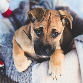 Малышка Лесси - Собаки в добрые руки