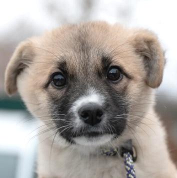 Жемчужинка - Собаки в добрые руки