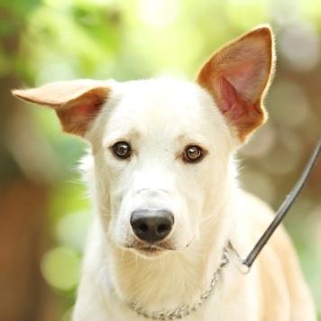 Лавр - Собаки в добрые руки