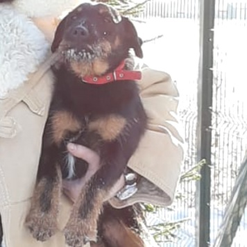 Марик - Пропавшие собаки