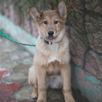 Чупакабра - Собаки в добрые руки