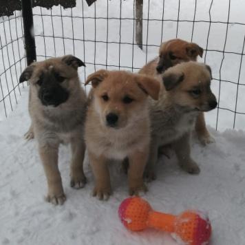 dogs - Собаки в добрые руки