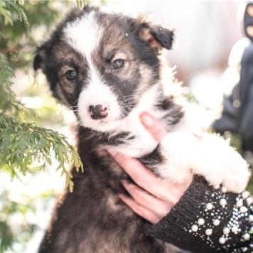 Милочка - Собаки в добрые руки