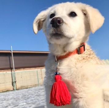 Луна - Собаки в добрые руки