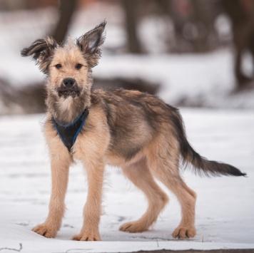 Карина - Собаки в добрые руки