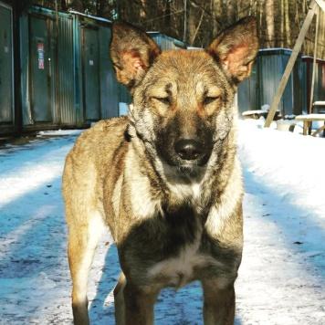 Лисенок/Лиси - Собаки в добрые руки