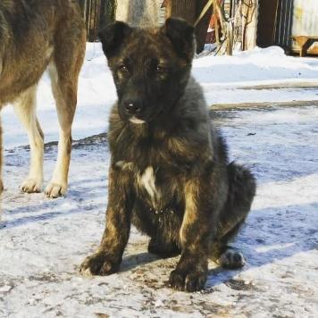 Робби - Собаки в добрые руки