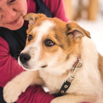 Муркоша - Собаки в добрые руки
