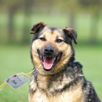 Рич - Собаки в добрые руки