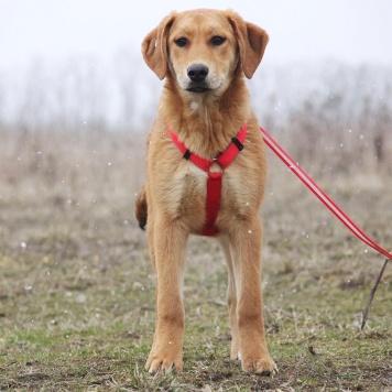 Арабика - Собаки в добрые руки