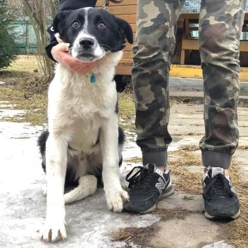 Оливер - Собаки в добрые руки