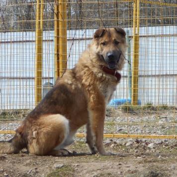Локки - Собаки в добрые руки