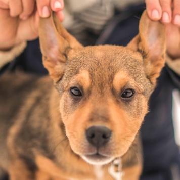 Мандариночка - Собаки в добрые руки