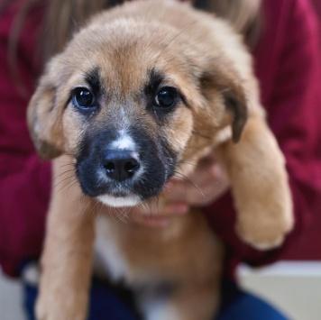 Марфушка - Собаки в добрые руки