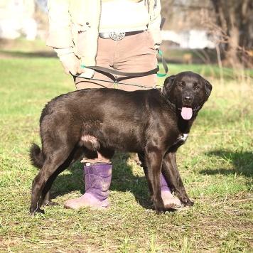 Родя - Собаки в добрые руки