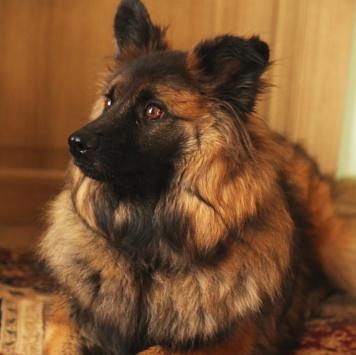 Шуня - Собаки в добрые руки