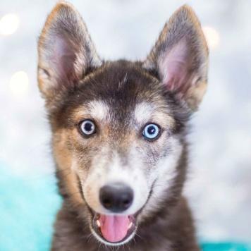 Хасята - Собаки в добрые руки