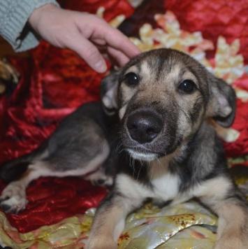 Варежка - Собаки в добрые руки