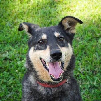 Люсиль - Собаки в добрые руки