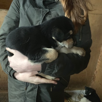 Еще щенок - Собаки в добрые руки