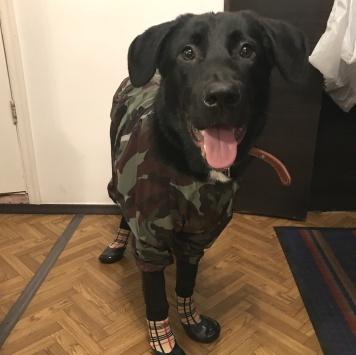Пьеро - Собаки в добрые руки