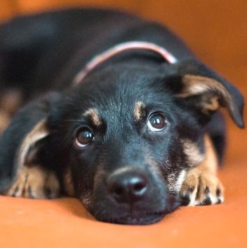 Щенок Рэй - Собаки в добрые руки