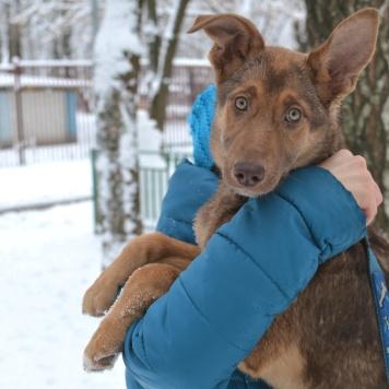 Панакота - Собаки в добрые руки