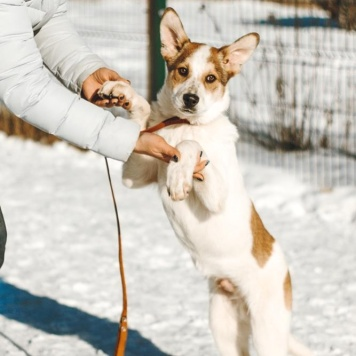 Дэнчик - Собаки в добрые руки