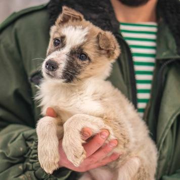 Лисик - Собаки в добрые руки