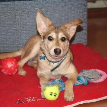 Валентинка - Собаки в добрые руки