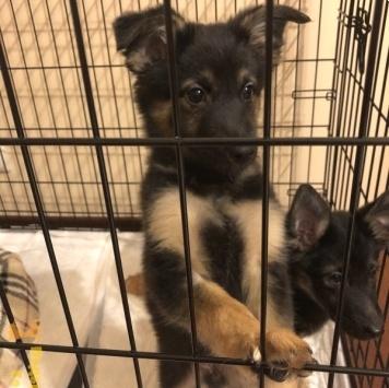 Мила и Кузя - Собаки в добрые руки