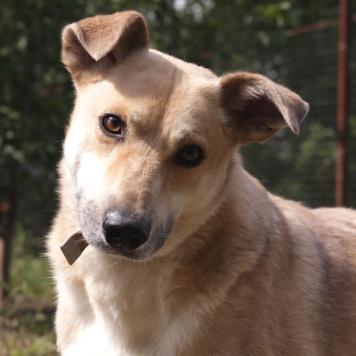 Гектор - Собаки в добрые руки