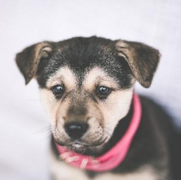 Пупсы - Собаки в добрые руки