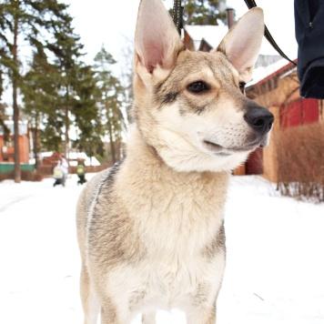 Мая - Собаки в добрые руки