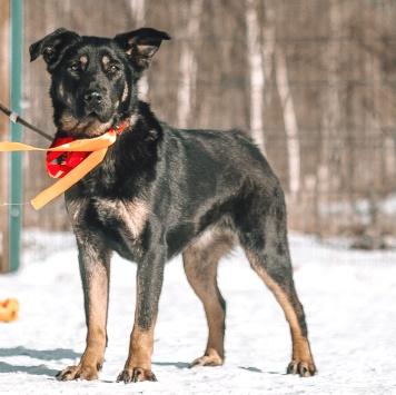 Гердочка - Собаки в добрые руки