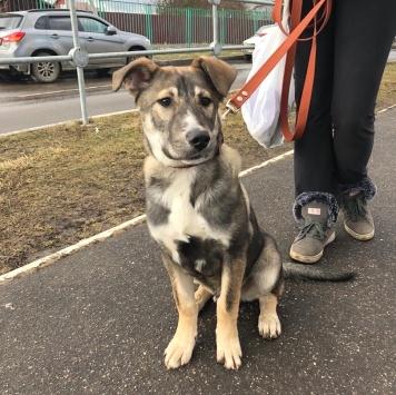 Серёга - Собаки в добрые руки