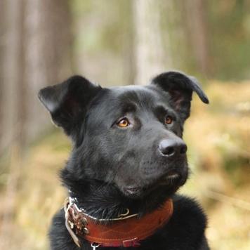 Дамир - Собаки в добрые руки