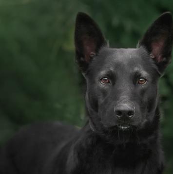 Джем - Собаки в добрые руки