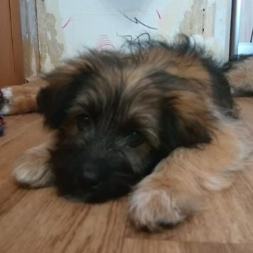 Тотоша - Собаки в добрые руки