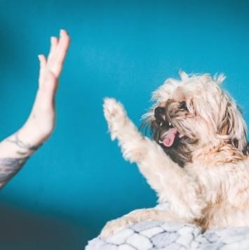 Тинки - Собаки в добрые руки