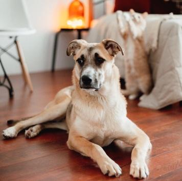Балтимор/Балти - Собаки в добрые руки