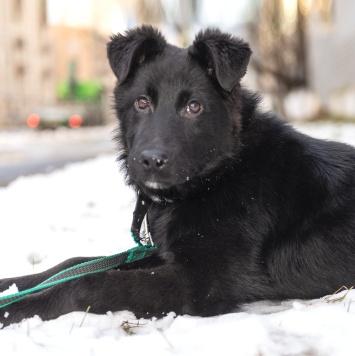 Сёма - Собаки в добрые руки