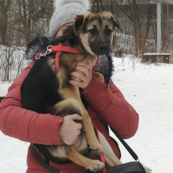 Бакса - Собаки в добрые руки