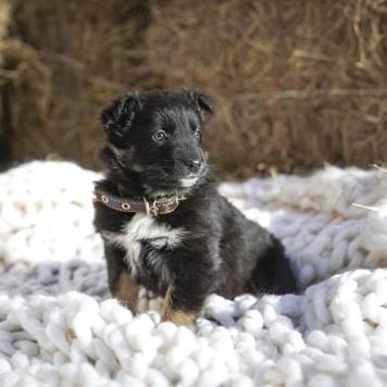 Блэк Берри - Собаки в добрые руки