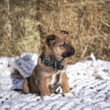 Джек Воробей - Собаки в добрые руки