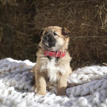 Кукки - Собаки в добрые руки