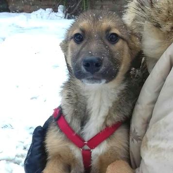Кася - Собаки в добрые руки